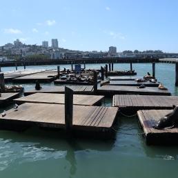 Pier 39 - Sea Lions