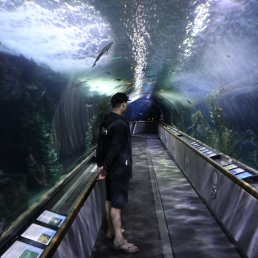 Aquarium of the Bay