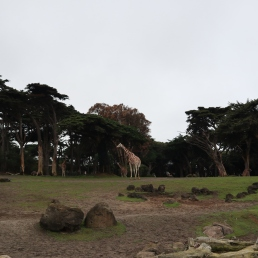San Fran Zoo